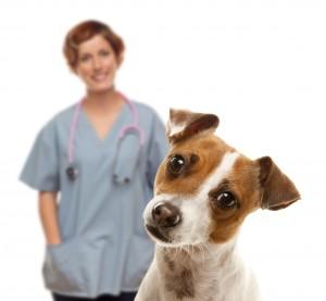 vet, dog, female vet
