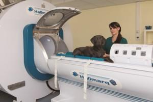 Hallmarq veterinary imaging