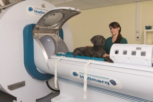 Hallmarq veterinary imaging