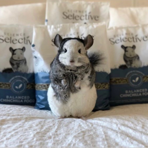Selective rebrand has shelf appeal and features Instagram-famous pet