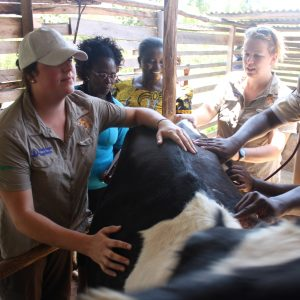 XLVets raises £60,000 and makes a practical difference with Send A Cow charity