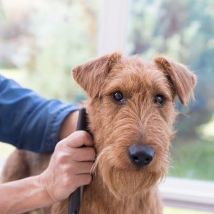 Vital Pet Group says pet owners are embracing the home hair cut trend