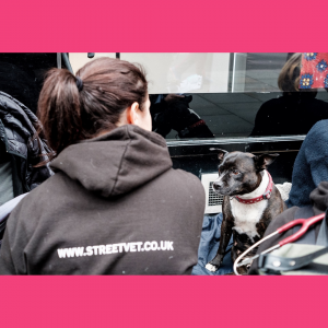 Purina Petcare to work with StreetVet charity to supply veterinary diets for pets
